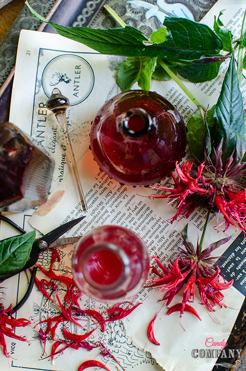 Monarda or bee balm syrup recipe/ Food photography by Candy Company