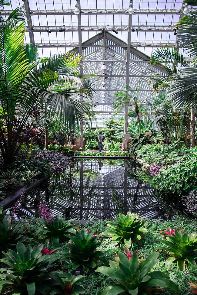 Garfield Park Conservatory hicago